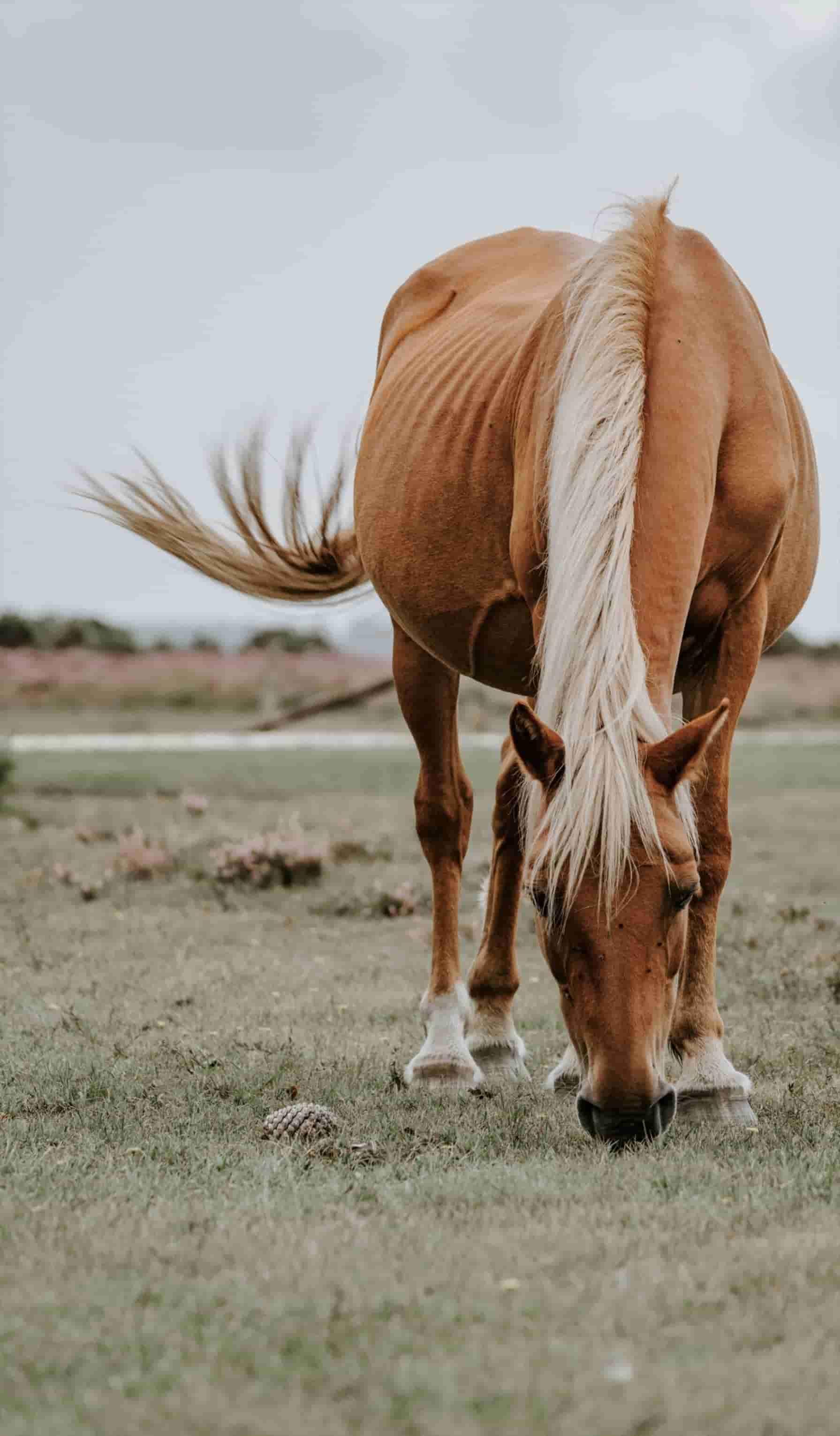 Häst som betar utanför stall.
