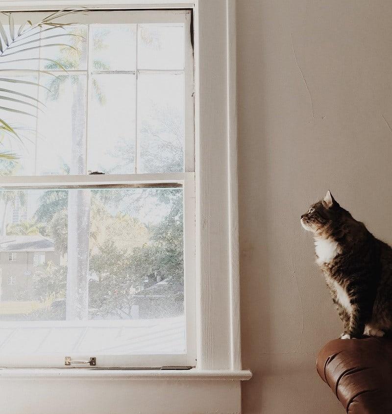 Katt kikar ut genom ett gammalt fönster med spröjs.