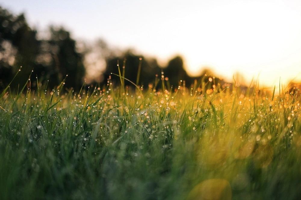 Solen lyser på en grön gräsmatta.