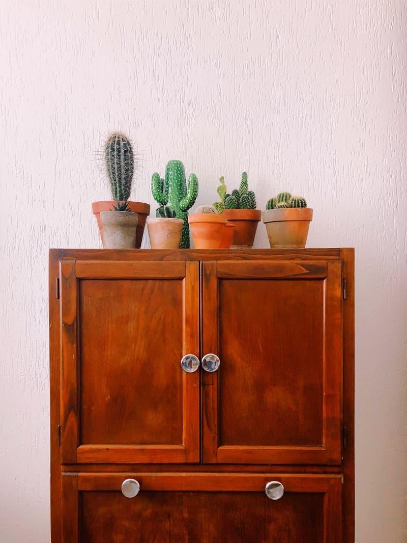 Små kaktusar som är placerade ovanpå en byrå.