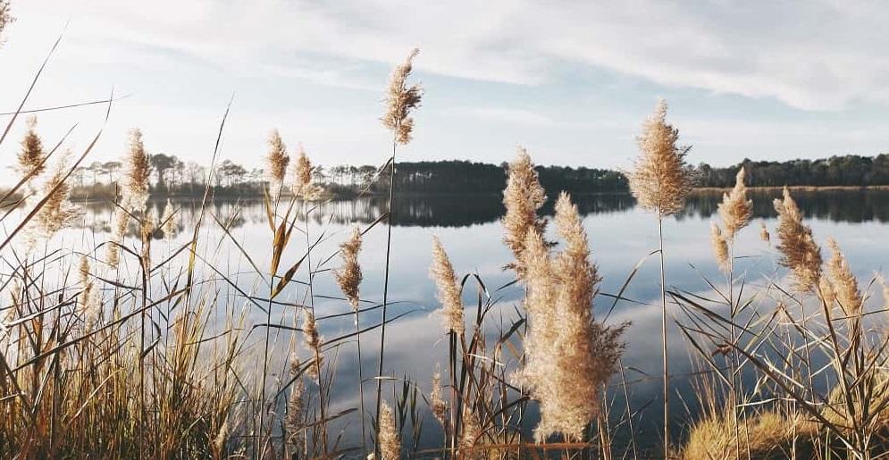 sjö i vårsol