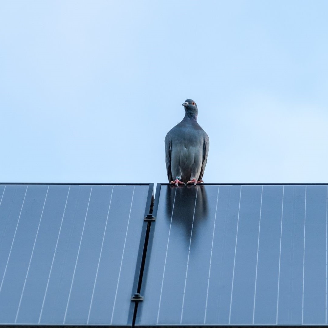Fågel som sitter på solpanel