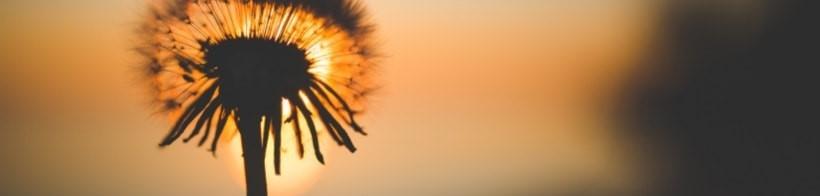 solenergi är en förutsättning för liv
