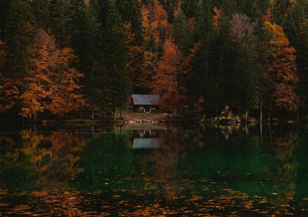 En stuga omgiven av tjock skog.