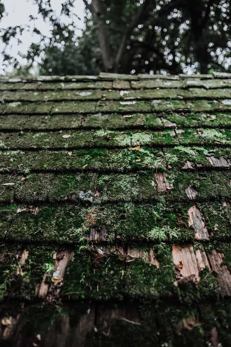 Ett tak som det växer mossa på - i stort behov av renovering.