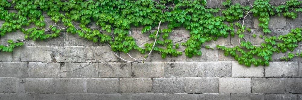 En trädgårdsmur av sten.