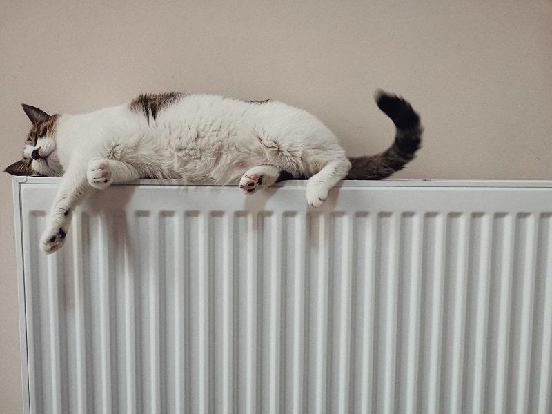 En katt ligger på ett element.